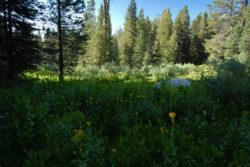 Pristine Meadow